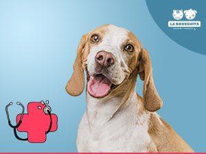 Coronavirus y tus mascotas