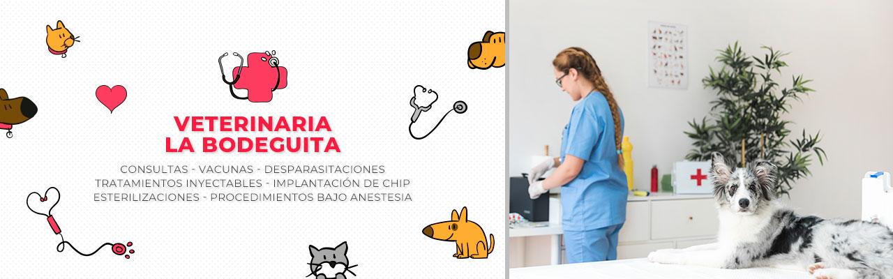 veterinaria san bernardo